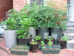 containergardening_zpsf7ea52e2